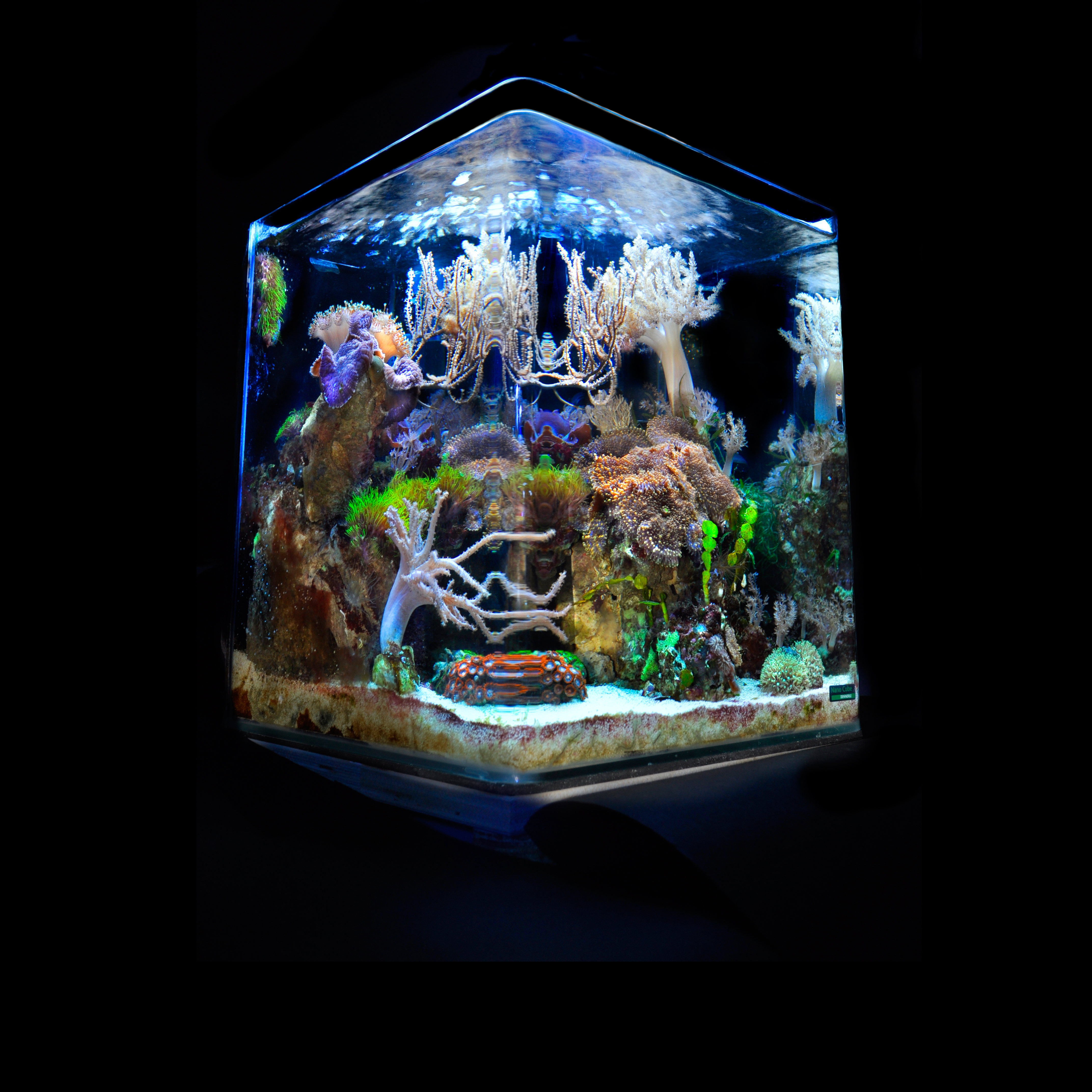 aquarium nano cube marinus. Black Bedroom Furniture Sets. Home Design Ideas