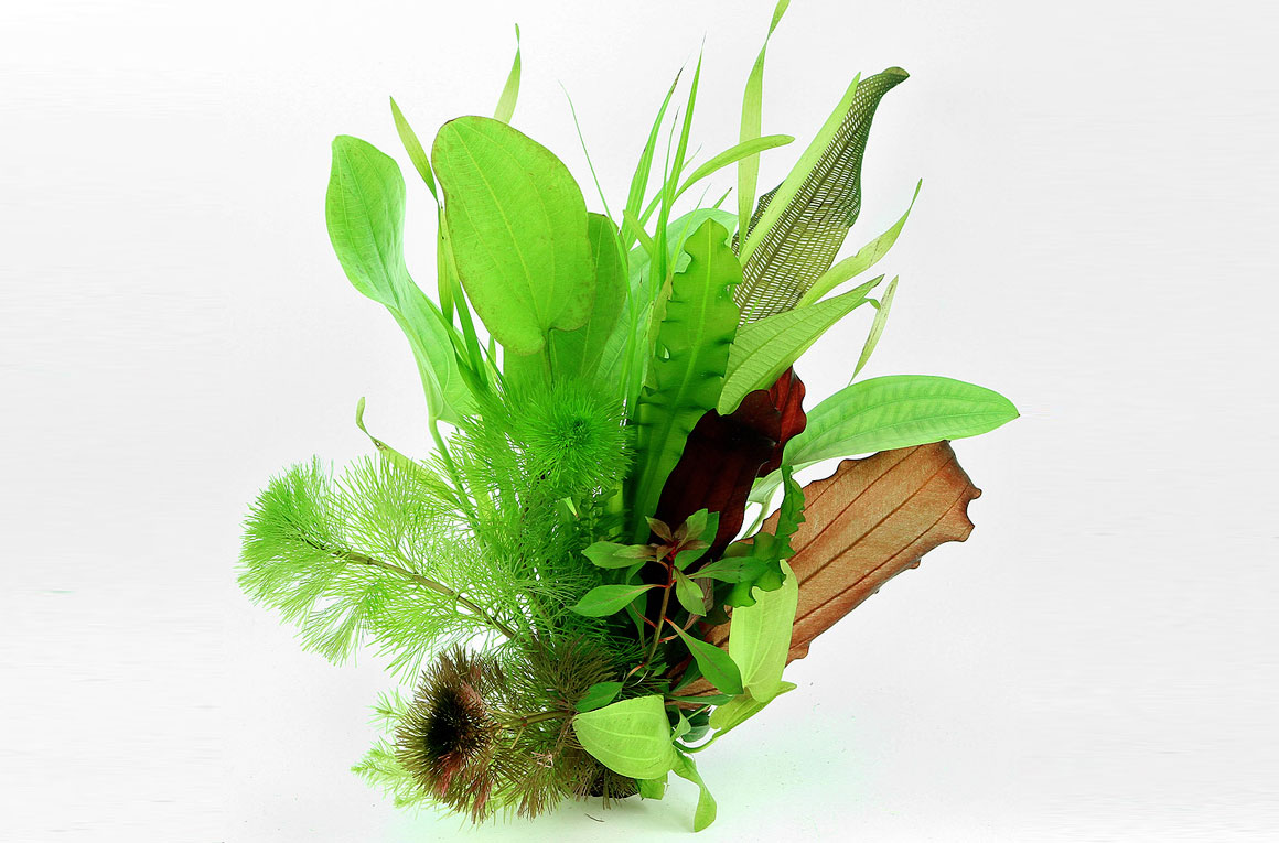 """S30 4/"""" Large Realistic Artificial Plants for Aquarium//Fish Tank SHIP FROM US"""